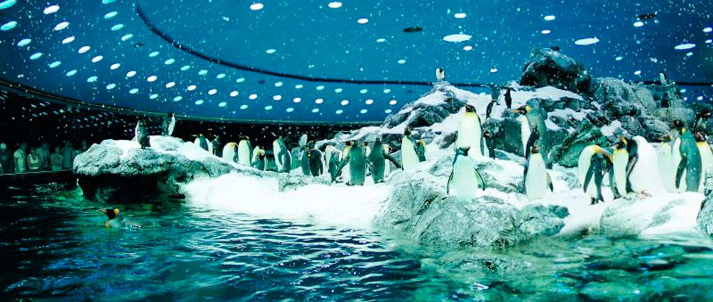 Loro-Parque-Pingüinario